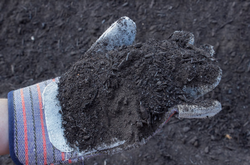Picture of black soil